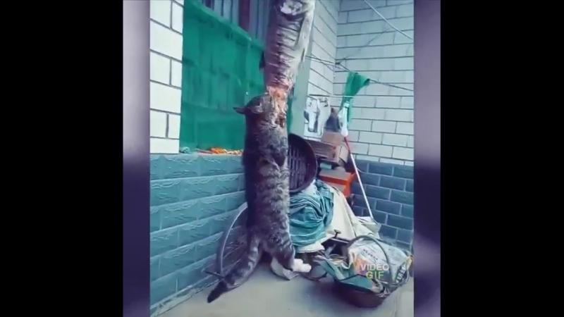 Прикольный кот ест рыбу.