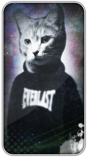 Аватарки для в вк с котами