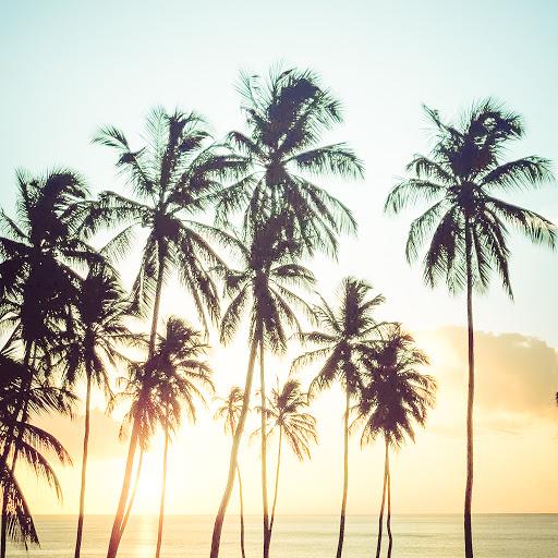 Nikonn альбом Salonica-Hawaii