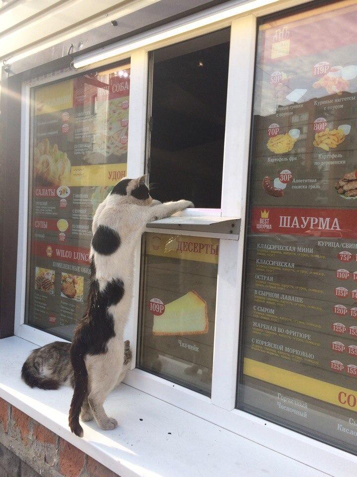 Две рыбных шавермы, пожалуйста!