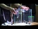 Видео мастер-класса Aquael - Часть 3