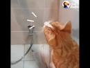 Сломаный Кот