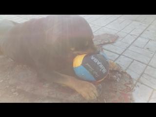 Жорес и мячик )
