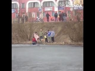 Люди пришли на помощь четвероногим друзьям.mp4