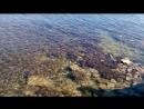 Берег Голубой бухты, Геленджик. Санаторий Голубая бухта. 2015г.