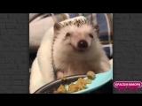 Ежик кушает так, как будто улыбается☺ ☺