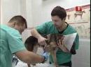 НОВОСТИ Регион - Наркоз для животных применять больше не будут © ТРК МОГИЛЕВ