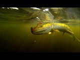 Fishing: catching first pike on home-made soft-bait lure underwater cam. Рыбалка: щука на силикон.