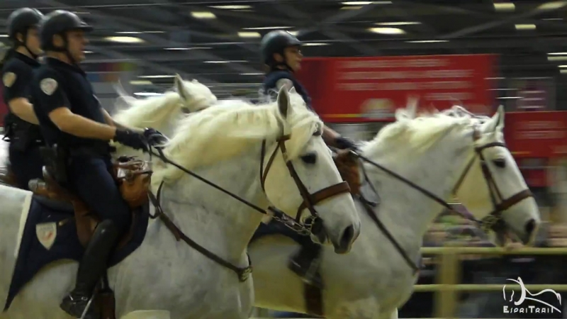 Brigade Equestre de Lille