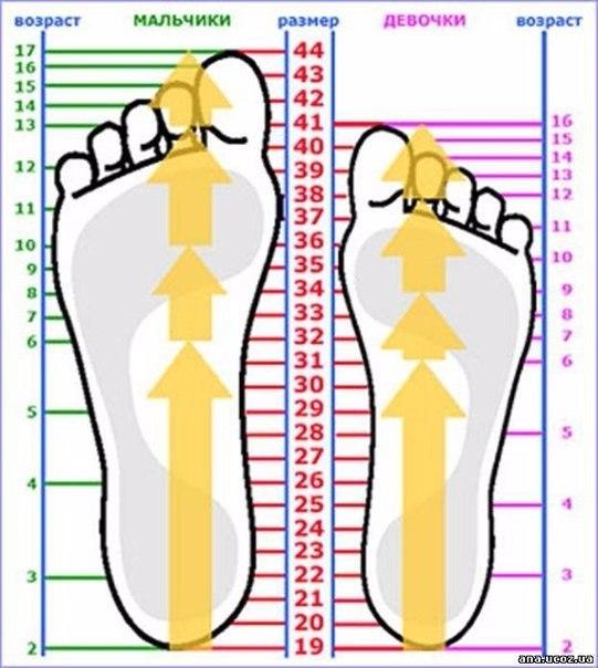 Таблица размеров стопы