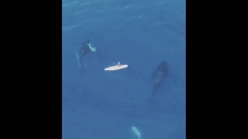 О дивный подводный мир 💙