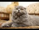 Наполнитель ВиСи Клозет силикагелевый для кошек