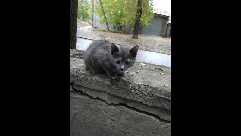 Котята по имени ГАВ часть 2