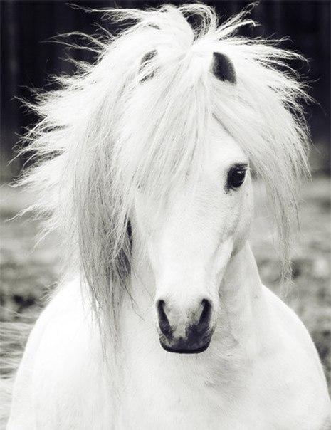 2014 - год лошади