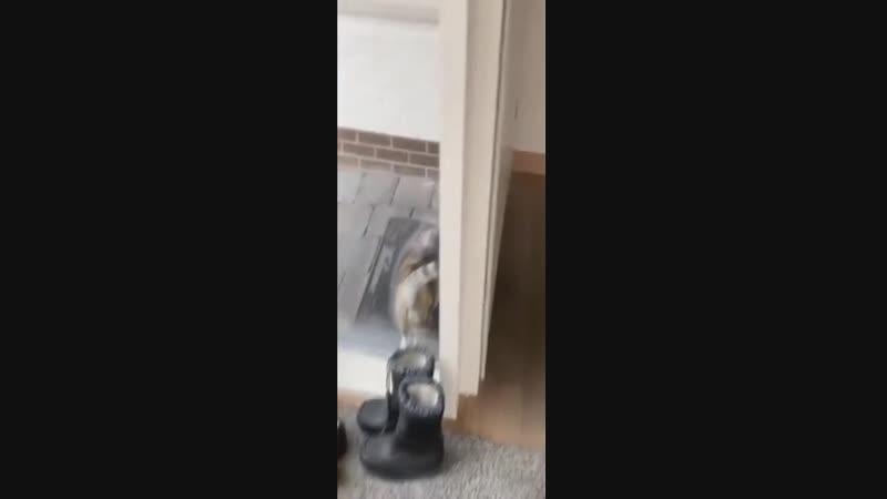 Когда уже домофон поставите...