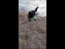 Собака чистит от мусора макеевское море, которое засрал человек !