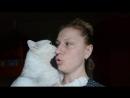 Моя любимая кошечка Сирена!