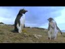 Пингвин. Шпион под прикрытием . 3 серия
