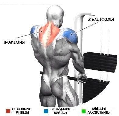 План по прокачке мощной спины в картинках и с полным указанием задействованных мышц