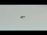 В ювелирном магазине в Италии муравей попытался украсть бриллиант. Момент дерзкой кражи попал на видео.