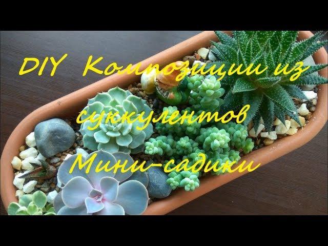 DIY Композиции из суккулентов Мини-садики DIY the Composition of succulents Mini gardens