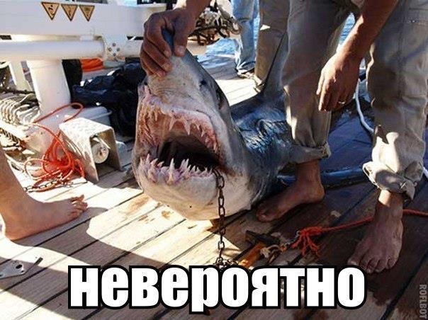 Удивительные и страшные находки в желудке акулы  ТОП самых интересных находок в желудке акулы опубликовала британская газета The Times.  1. Итак, в 1821 году в желудке был обнаружен...