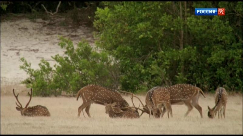 01. Дикая Шри Ланка. Озерный край - Wild Sri Lanka. Land Of Lakes (2015)