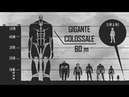 Attack on Titan: Dimensioni dei Giganti / Titan Size
