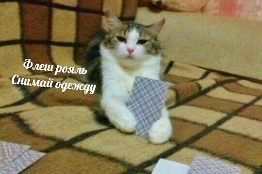 Руслан Кондратюк   Калининград