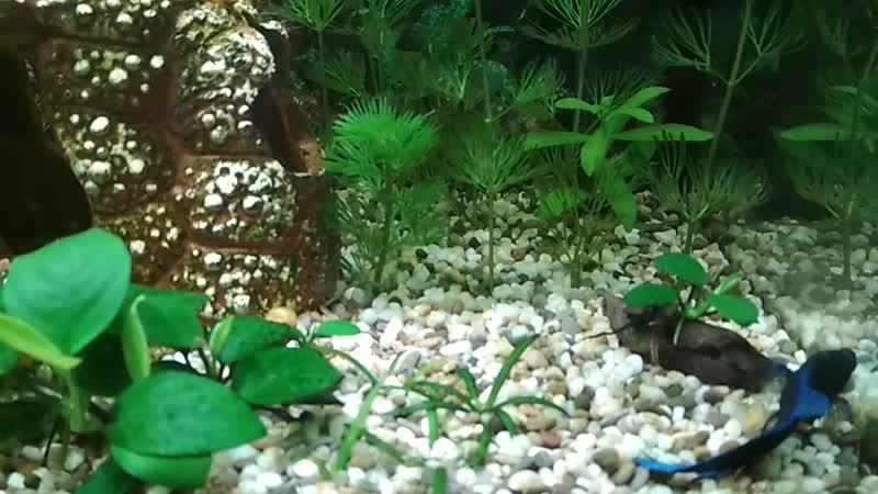 А вас рыбы успокаивают? 😂 Дело было вечером, делать было нечего)    рыбки аквариум успокоение видео вопрос позитив