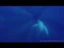 Whale Encounters in Tonga
