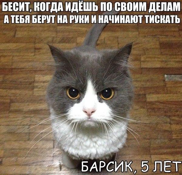 http://cs543108.vk.me/v543108926/18484/8yv_3AFGEvQ.jpg