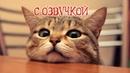 Приколы с котами со смешной ОЗВУЧКОЙ – Полный УГАР про котов и кошек 2018 – Domi Show