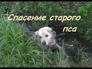 Спасение старой выброшенной собаки из канавы ┃ Rescue dog