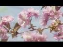 ♥ Michel Pépé - Ciel Radieux♥ (Relaxing, soothing music)♥