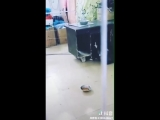 FUNNY HUSKY AND CAT FIGHT ( WAIT FOR IT ).