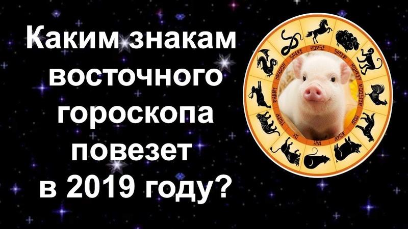 Несмотря на консервативность, желтая свинья не имеет ничего против быстрого карьерного роста или развития предпринимательства.