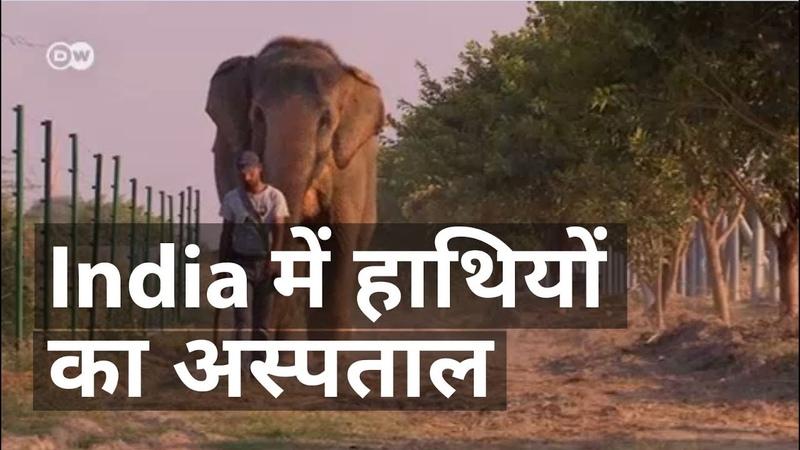 भारत में बना हाथियों का अस्पताल [India's first elephant hospital]