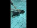 Пашка на аква в Светлогорске ныряет