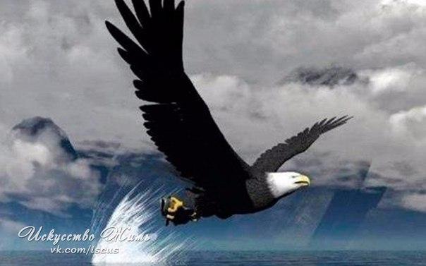 Чтоб летать с орлами, не паситесь с индюками.  Брайан...