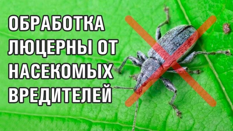 12-серия. Обязательная обработка люцерны от насекомых вредителей (28-06-2018)