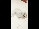 Try to train my dog using Shoot Me' as background music.. BANG! BANG!!
