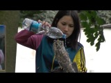 Как правильно поливать свою сову