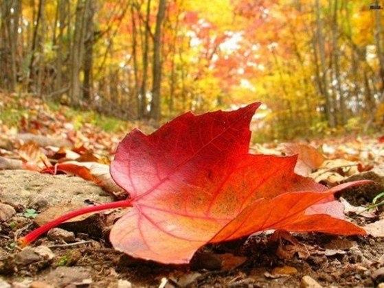 Осень – это вторая весна, когда каждый лист – цветок.