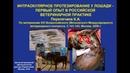 Интраокулярное протезирование у лошади - первый опыт в российской ветеринарной практике