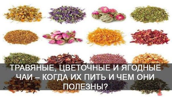 *Травяные, цветочные и ягодные чаи – когда их пить и чем они полезны*