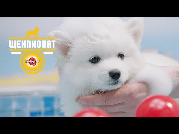 PEDIGREE® Спортивное купание Как мыть щенка