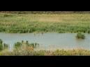 El Paraje Natural Municipal del Clot de Galvany de Elche