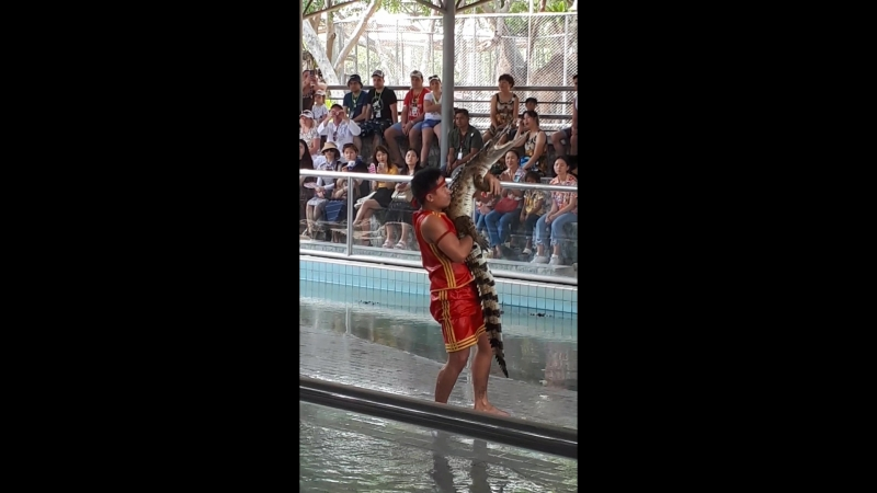 финал шоу крокодилов