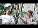 Музыка из к ф Бриллиантовая рука-Рыбалка у Белых скал